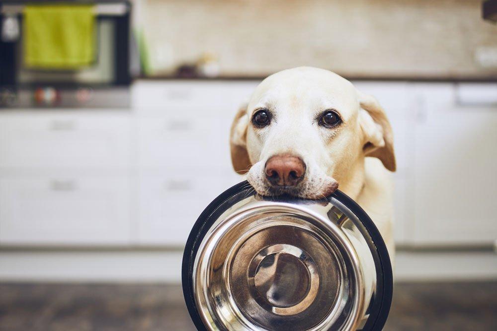 Dog Holding a Dog Bowl