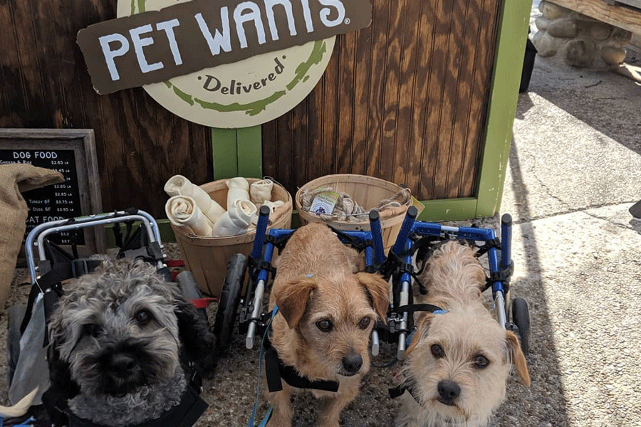 dogs in front of a pet wants mobile unit